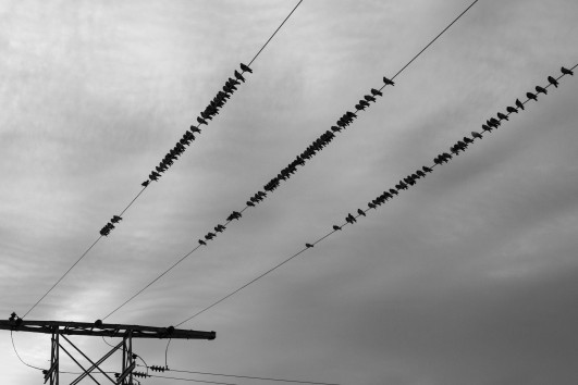 photo-1417309807426-472e833fa5d0 birds on a wire